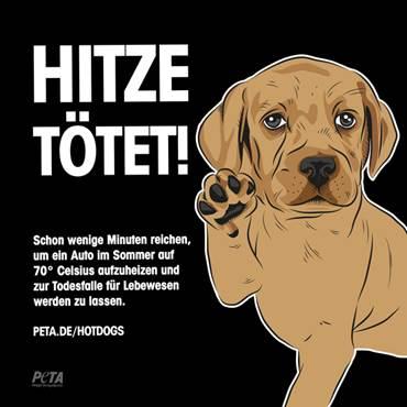 hunde_hitze