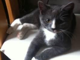 Kater Felix, der möglicherweise einem Tierfänger in die Hände gelaufen ist.