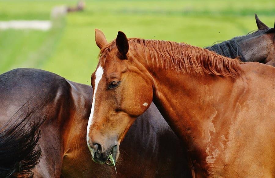 Tiere: Acht tote Pferde und drei Verletzte bei Autounfall auf der A65