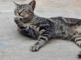 Katze auf Straße