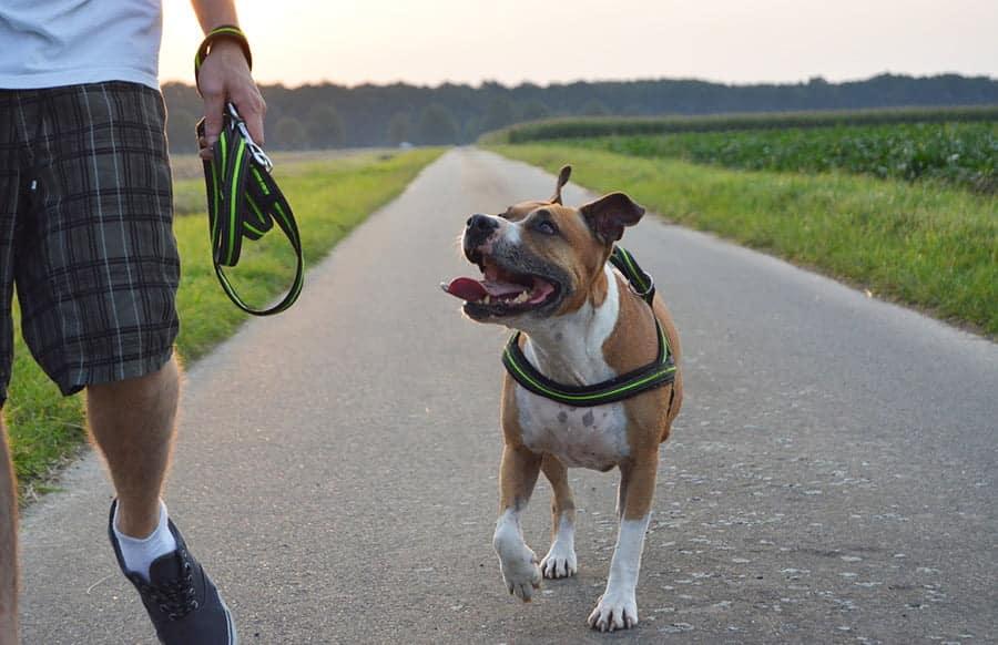 Treuer Hund Begleitet Betrunkenen Zur Ehefrau