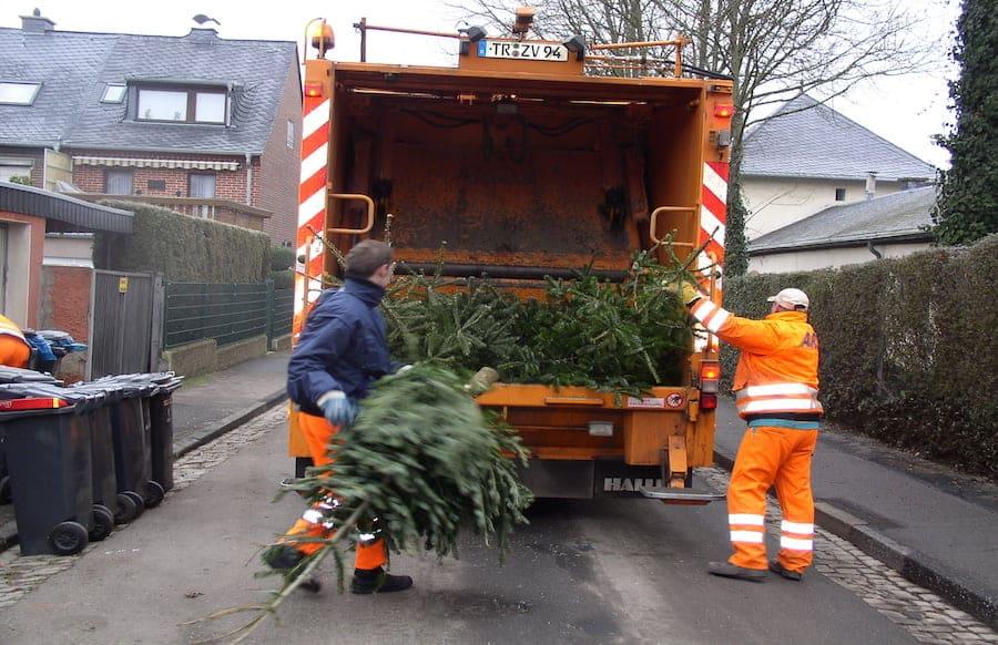 Weihnachtsbaum Service.Wohin Mit Dem Weihnachtsbaum Entsorgungsmöglichkeiten In Der Region