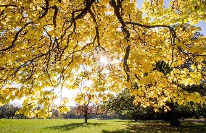 Sonne und Herbstblätter