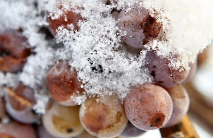 Gefrorene Eisweintrauben