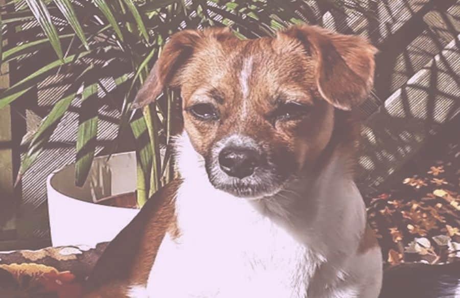Giftköder Hund Symptome