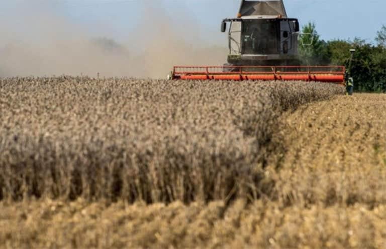 Zu wenig Sonne, zu viel Regen – Getreideernte bleibt unter hohen Erwartungen
